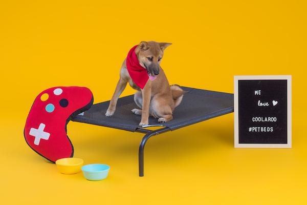 CPETBEDL,lit pour chien -  lit sur pieds pour chien