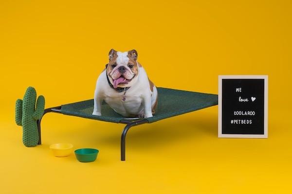 CPETBEDM, lit orthopédique pour chien -   lit d