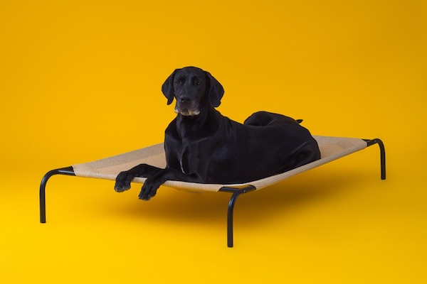 CPETBEDXL, lit lavable pour chien -  lit lavable pour chien